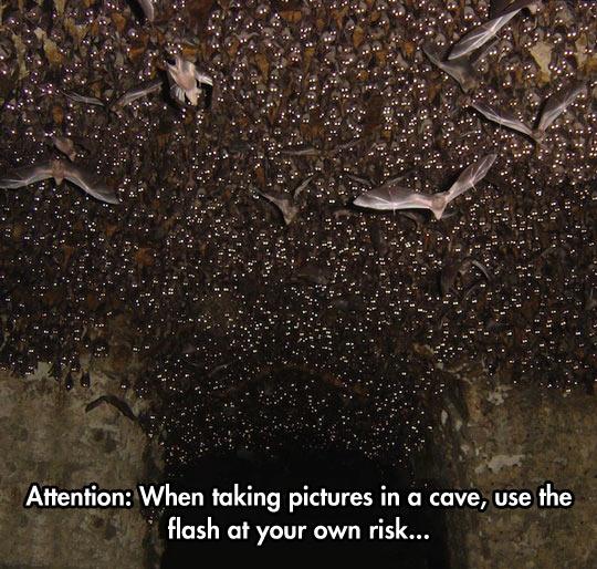 funny-cave-bat-flash-eyes