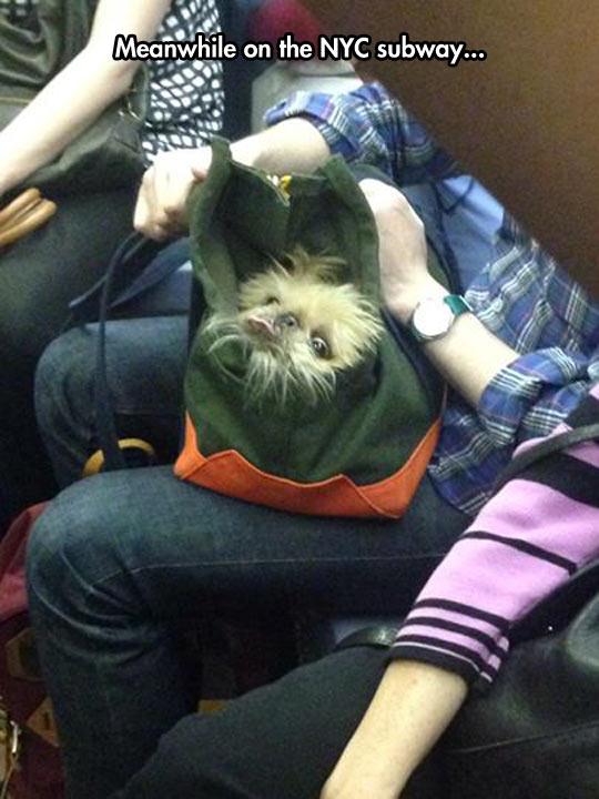 funny-dog-bag-subway-NYC