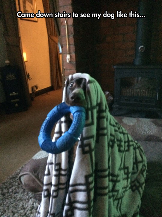 funny-dog-blanket-toy-waiting-home