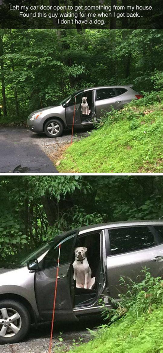 funny-dog-car-sitting-waiting
