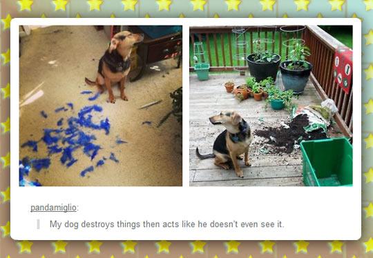 funny-dog-destroy-pillow-bag-dirt