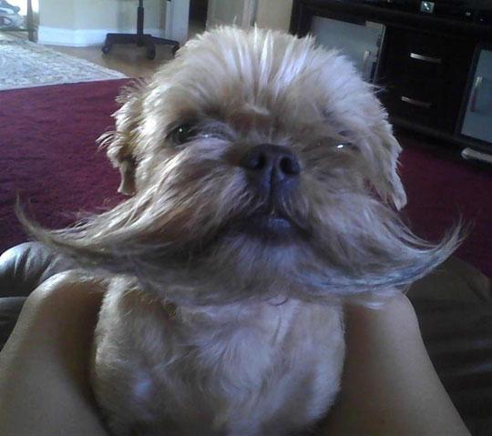 Dog With An Epic Beard
