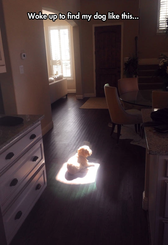 funny-dog-kitchen-light-sun