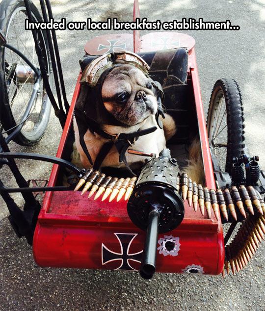 funny-dog-pug-weapon-Red-Baron