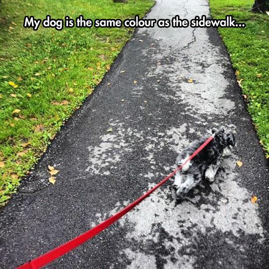 Wait, What Dog?
