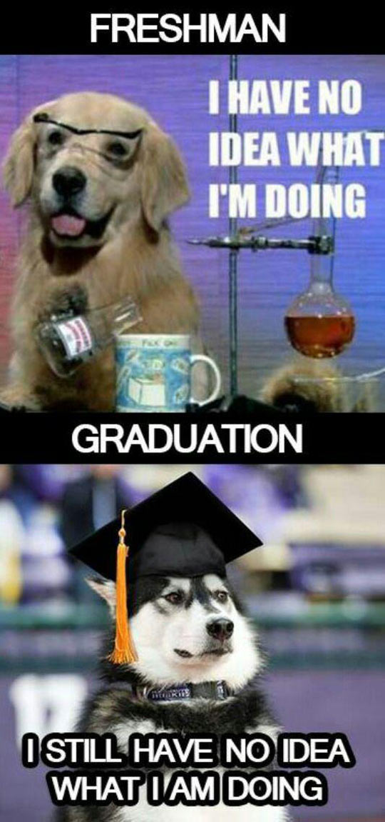 funny-dog-science-lab-graduation
