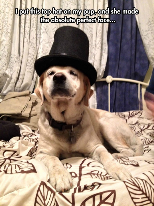 funny-dog-top-hat-fancy-face