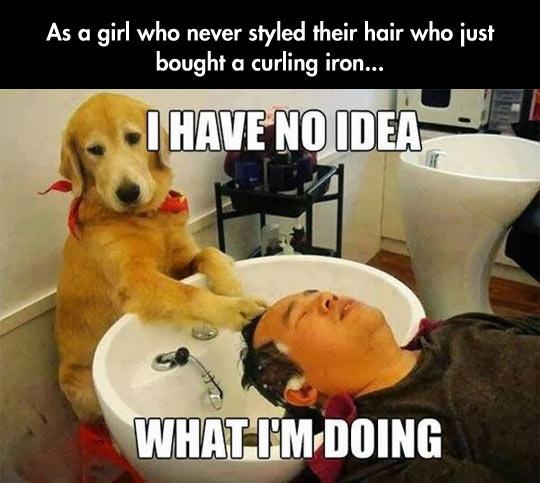 funny-dog-washing-head-man-sink