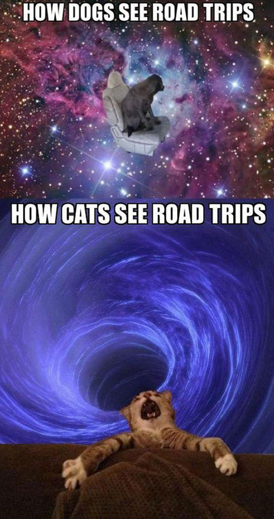 funny-dogs-cats-road-trips-space