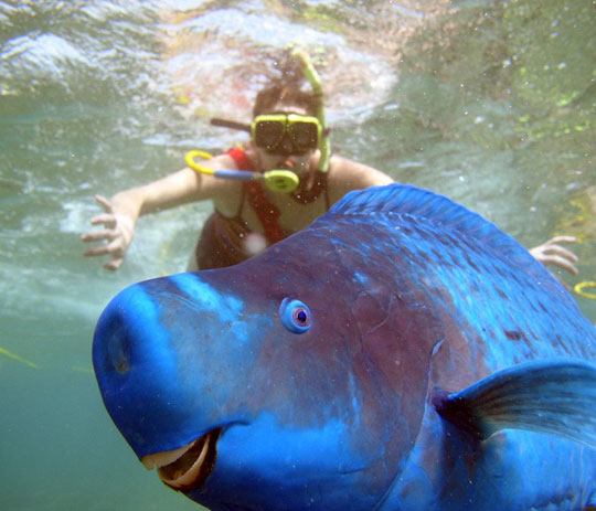 funny-fish-water-photobomb-snorkel