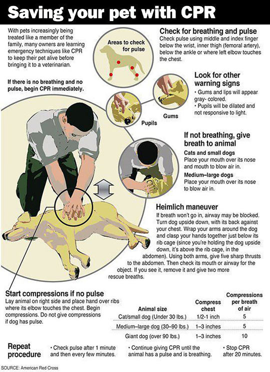 funny-guide-saving-pet-CPR-maneuver