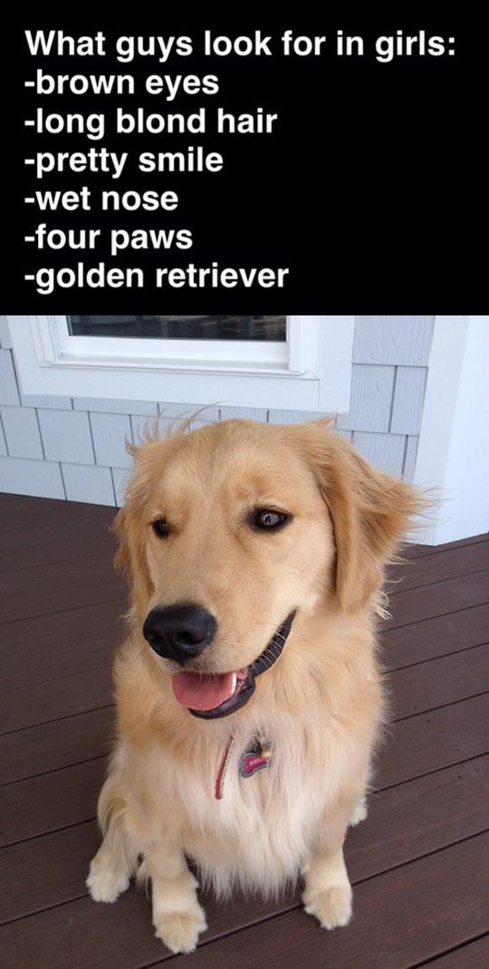 funny-guys-look-for-girls-golden-retriever