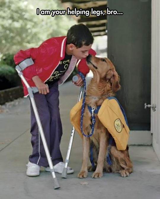 funny-kid-legs-helping-dog