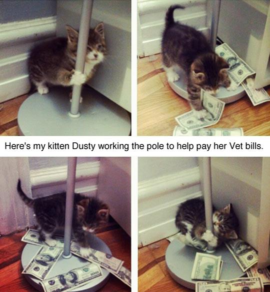 funny-kitten-dancing-pole-money