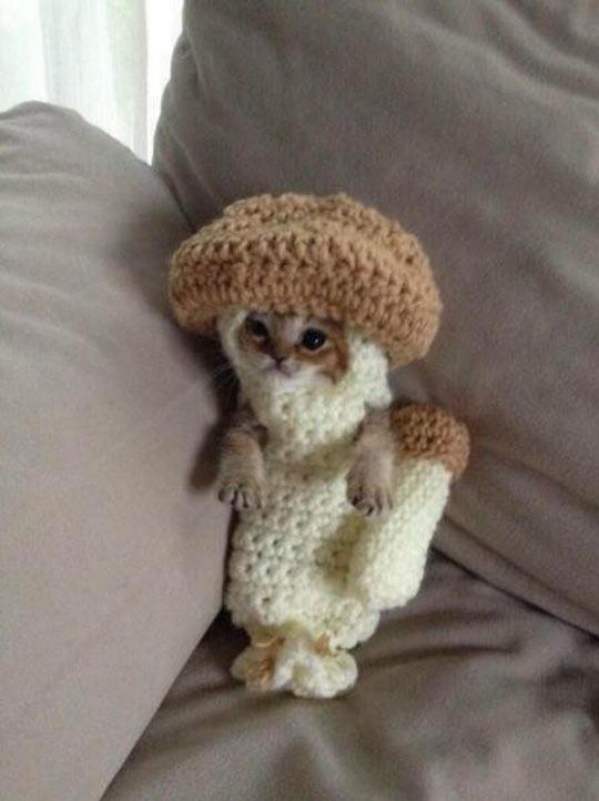 A Kitten In A Crocheted Mushroom Costume