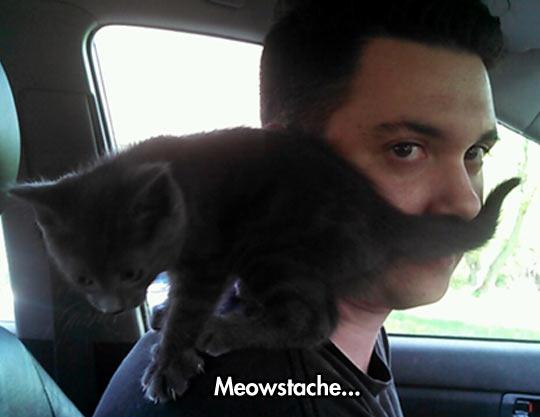 Cute Mustache