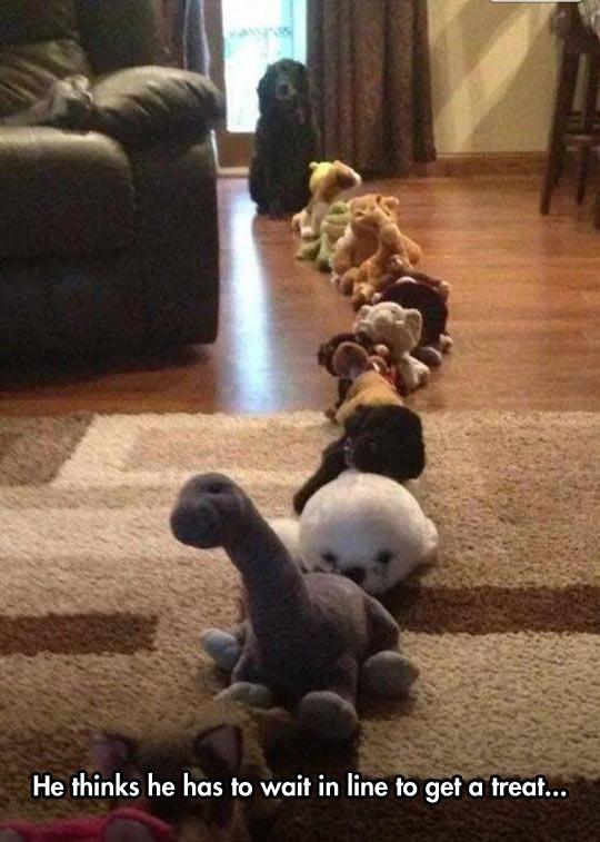 funny-line-toys-dog-waiting