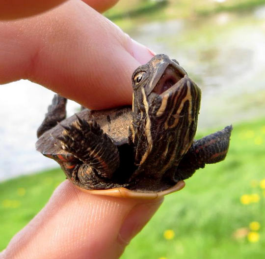 The Happiest Turtle On Earth
