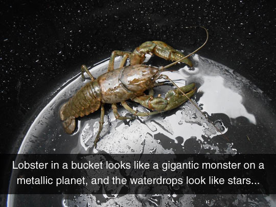 Looks Like A Gigantic Space Lobster