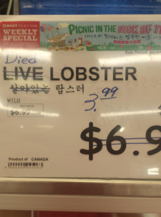 funny-lobster-live-died-price