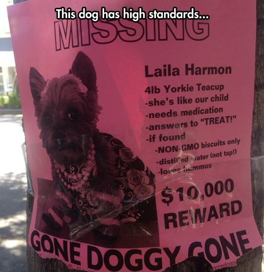 funny-lost-dog-sign-fancy