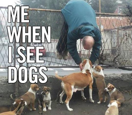 That Puppy Love