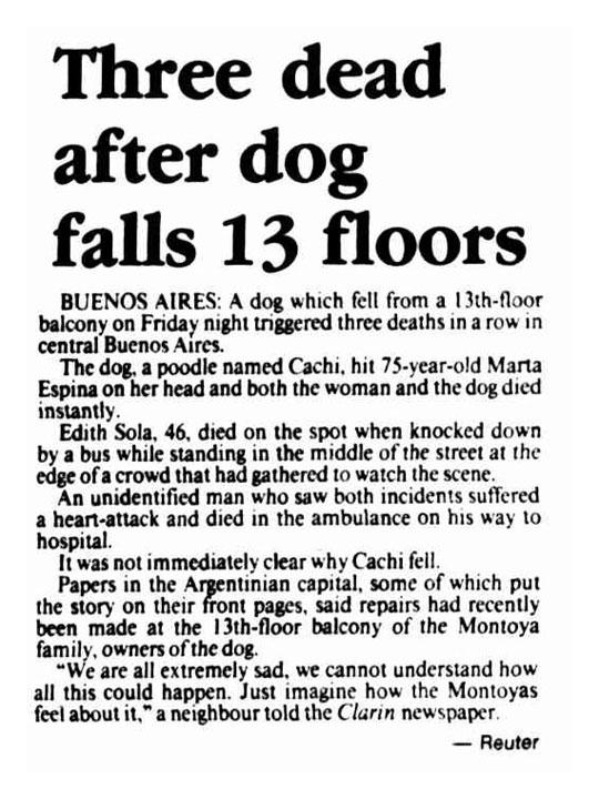 funny-news-dog-falling-thirteen-floors