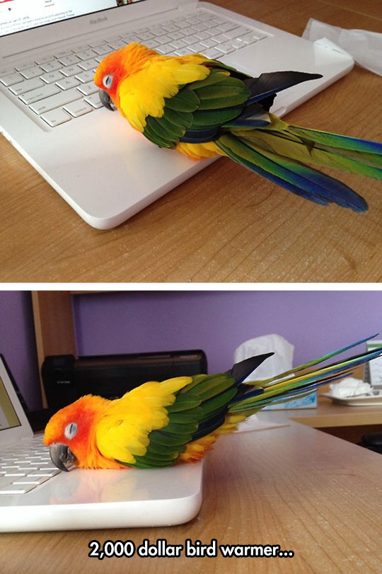 funny-parrot-computer-sleeping-notebook