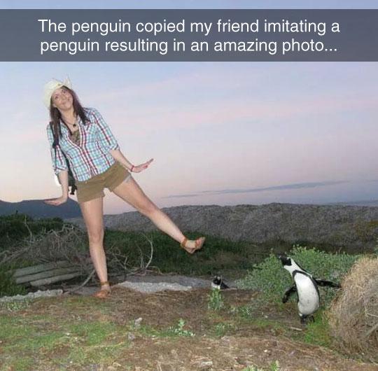 Sassy Penguins