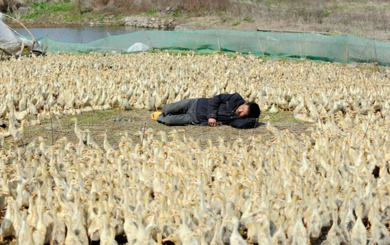 funny-people-passed-out-ducks