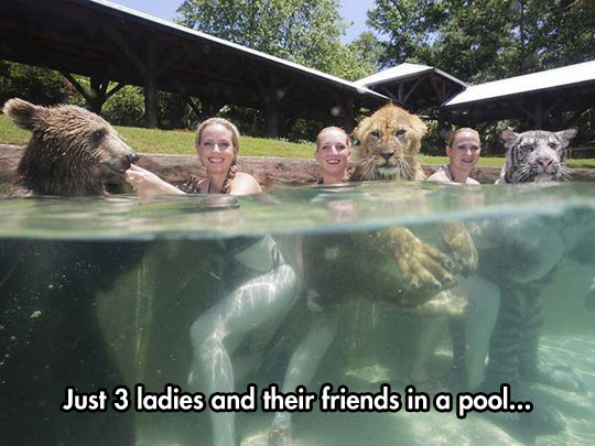 funny-pool-water-animals-bear-lion-tiger