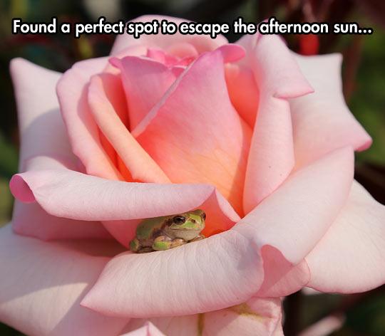 funny-rose-frog-sun-hidden