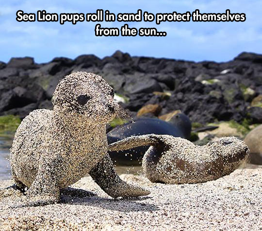 Little Sea Lion Covered In Sand