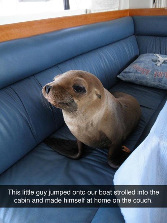 The Intruder Seal