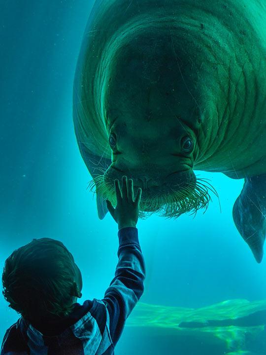 funny-seal-zoo-aquarium-kid-hand