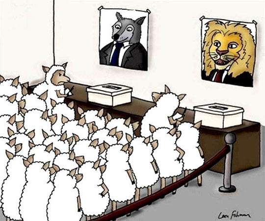 funny-sheep-lion-wolf-vote-politicians