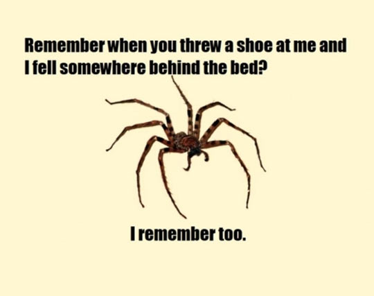 Spiders Do Remember