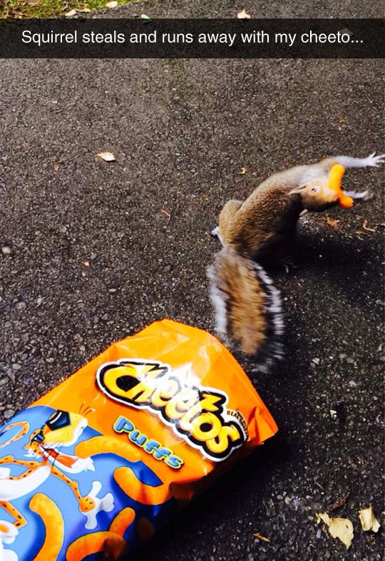 funny-squirrel-steals-Cheetos-package