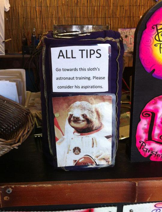A Sloth With Big Dreams