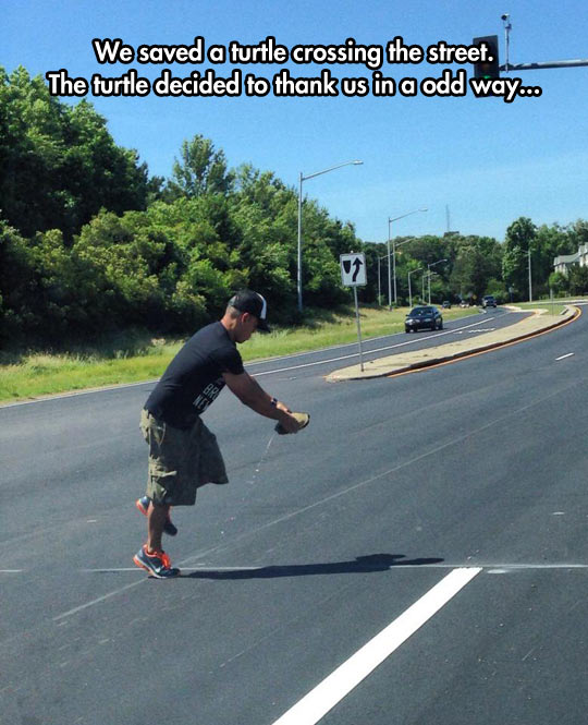 funny-turtle-crossing-street-man-carrying