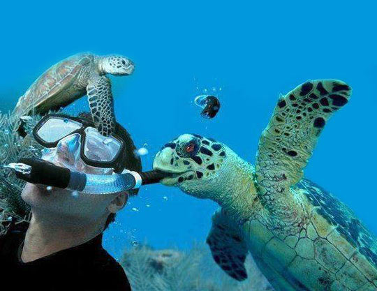How To Prank A Freediver
