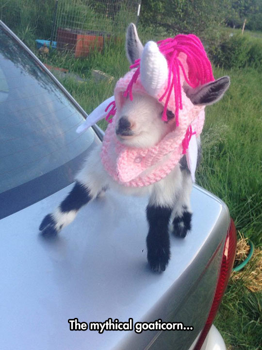 funny-unicorn-goat-hat-knitted