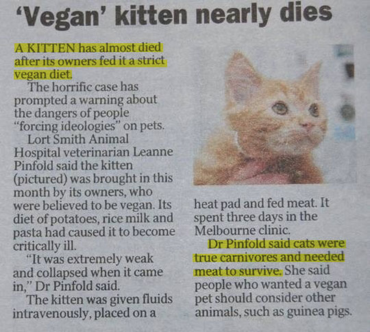 funny-vegan-kitten-owner-newspaper