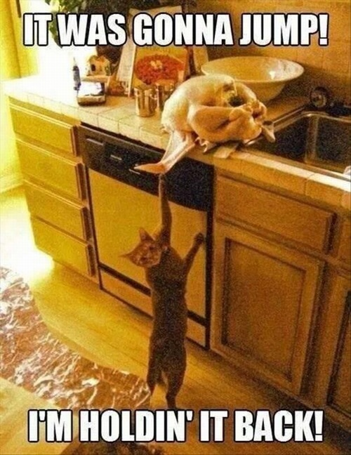 Animals-caught-red-handed-13