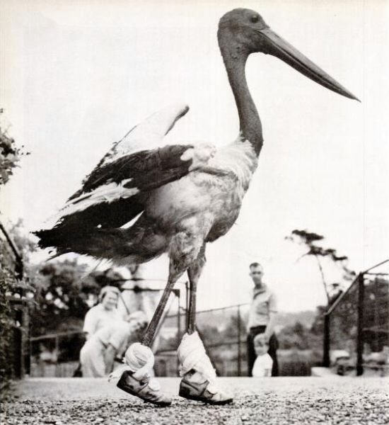 Crazy-Animals-from-Past-1