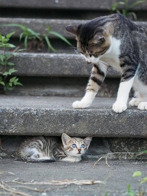 Hiding from mom