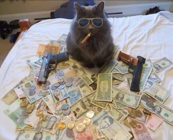 Royreid.ca-Gangsta-Cats-11-600x487