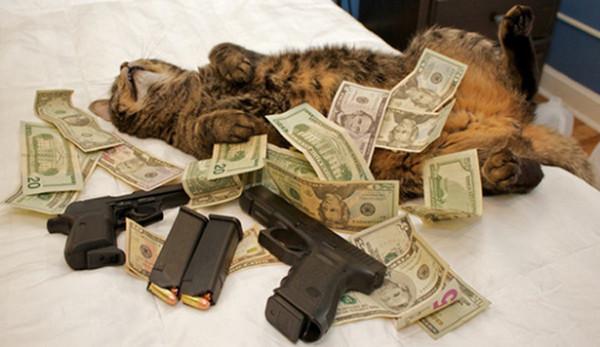Royreid.ca-Gangsta-Cats-15-600x347