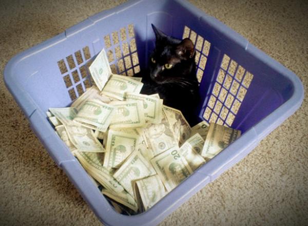 Royreid.ca-Gangsta-Cats-18-600x440