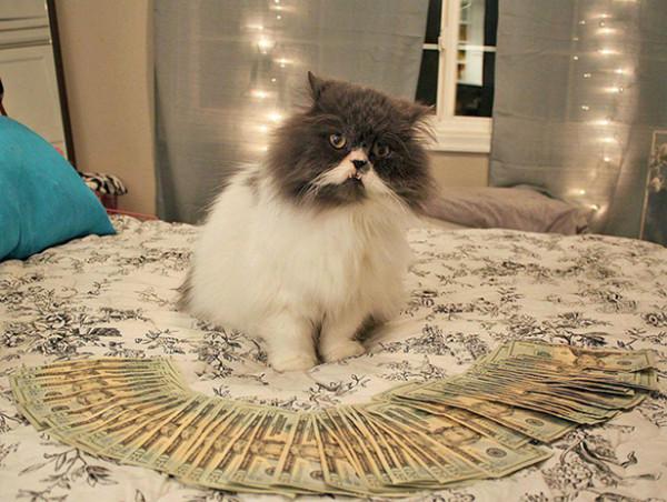 Royreid.ca-Gangsta-Cats-5-600x452